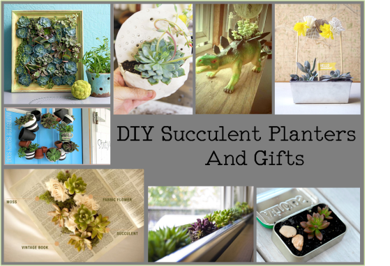 DIY succulent planters and gifts