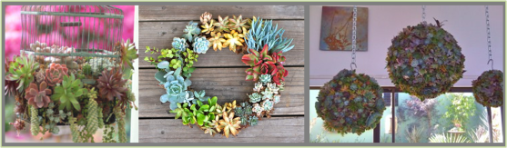 More succulent projects